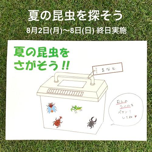 夏の昆虫を探そう